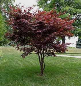 Декоративные формы растений с необычной окраской листвы