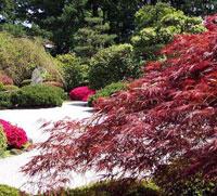 Садовые формы древесных и кустарниковых пород