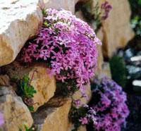 Камни в саду