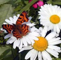 Как сделать сад бабочек