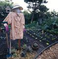 Календарь удобрения овощных культур