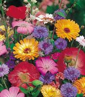 Цветущий сад с ранней весны до глубокой осени