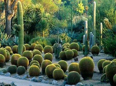 Ботанический сад Хантингтон